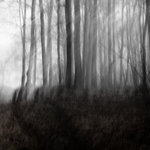 rörelser i dimman...