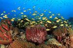 Levande korallrev