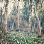vackra skog