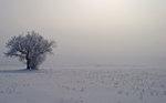 Kristallträd på fält