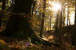 Skogens fot