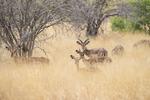 Blickar från Impala