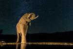 Elefantmöte i natten!