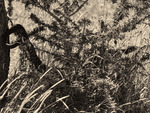 Läskiga ormen - en förmodad svart kobra -