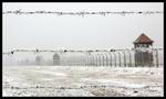 Jul i Auschwitz-Birkenau