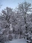 Snömys