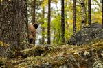 Nyfiken björn