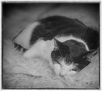 Sleepy Zigge