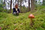 I svampskogen