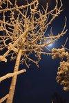 Nyårsnatt under fullmåne