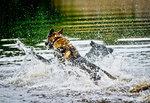 Baddare att bada
