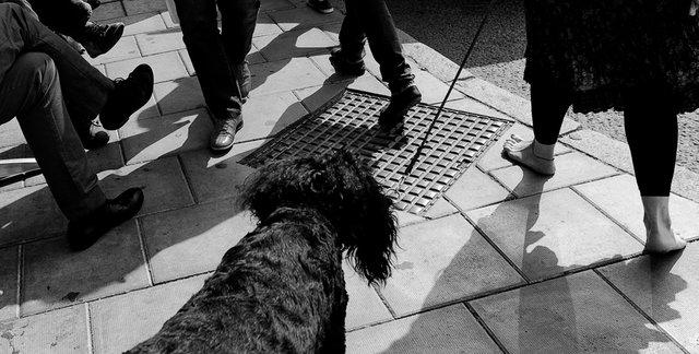 Bara fötter, hund och ben