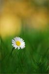 Ensam i gräsmattan