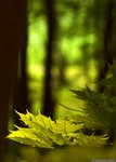 Skogsmorgon