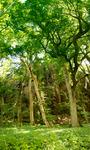 Skinande Träd