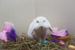 Glad påsk från Lumi :)