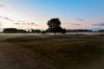Morgondimma på golfbanan