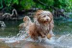 Vattenlek i sommarvärmen med bästa vännen