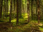Skogsglänta / Forest glade