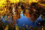 Dammen i höstfärger