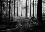 Skogsväsen