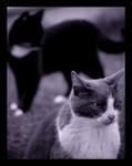 Straycat blues