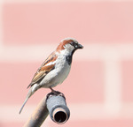 Fågel på styret