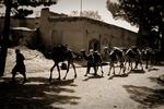 En karavan med Kuchi-nomader går genom Herat