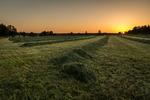 Nyslaget gräs