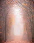 Salen i skogen