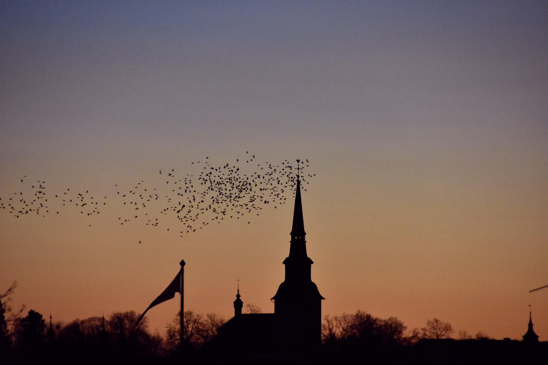 Kajor vid Lindesbergs kyrka Annandag jul 2016