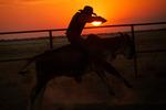Rodeo i solnedgången