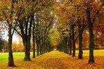 Autumn in Pershagen