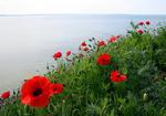 Rött och Blått hav