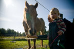 Gamla fina hästen