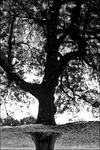 Trädens värld
