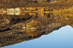 Liten ö i Kjelavatnet och spegling