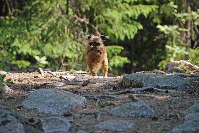 Doglas-på-sommarpromenad-i-skogen-2007