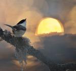 Talltitan hälsar solen....