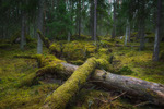 Gammelskogen