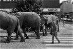 Elefanter o Kapp-Ahl