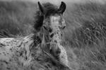 Föl, Dartmoor nationalpark