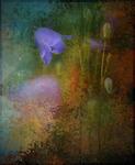 blåklockan vid ån