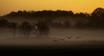 Morgon med tranor