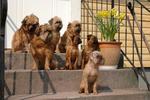 Doglas hos släkten i Borlänge-29-30-april-2006