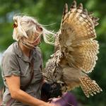 Fågelshow