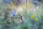 Blå, blå vingar