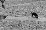 Pojke med sin hund