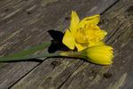 Blomma på parkbänk