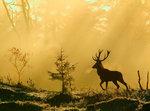 Den stora hjorten i den skimrande soluppgången